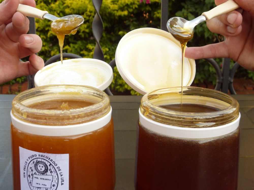 Tasting Parana Honey